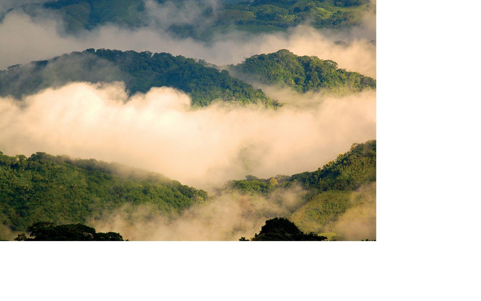 Bosques Secos
