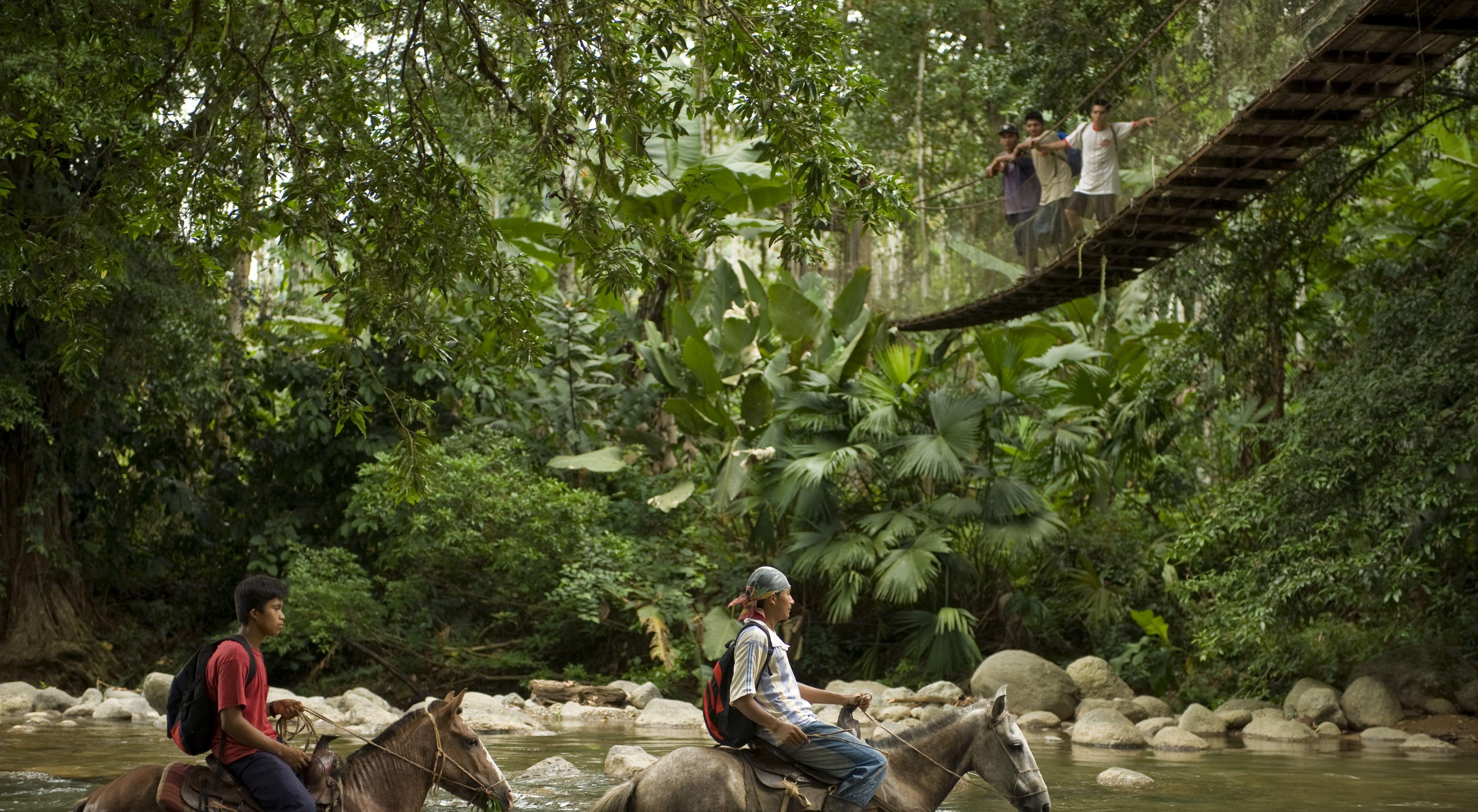 Vida comunitaria en el bosque del Parque Internacional La Amistad, Costa Rica. Escondidos en la esquina sureste de Costa Rica.