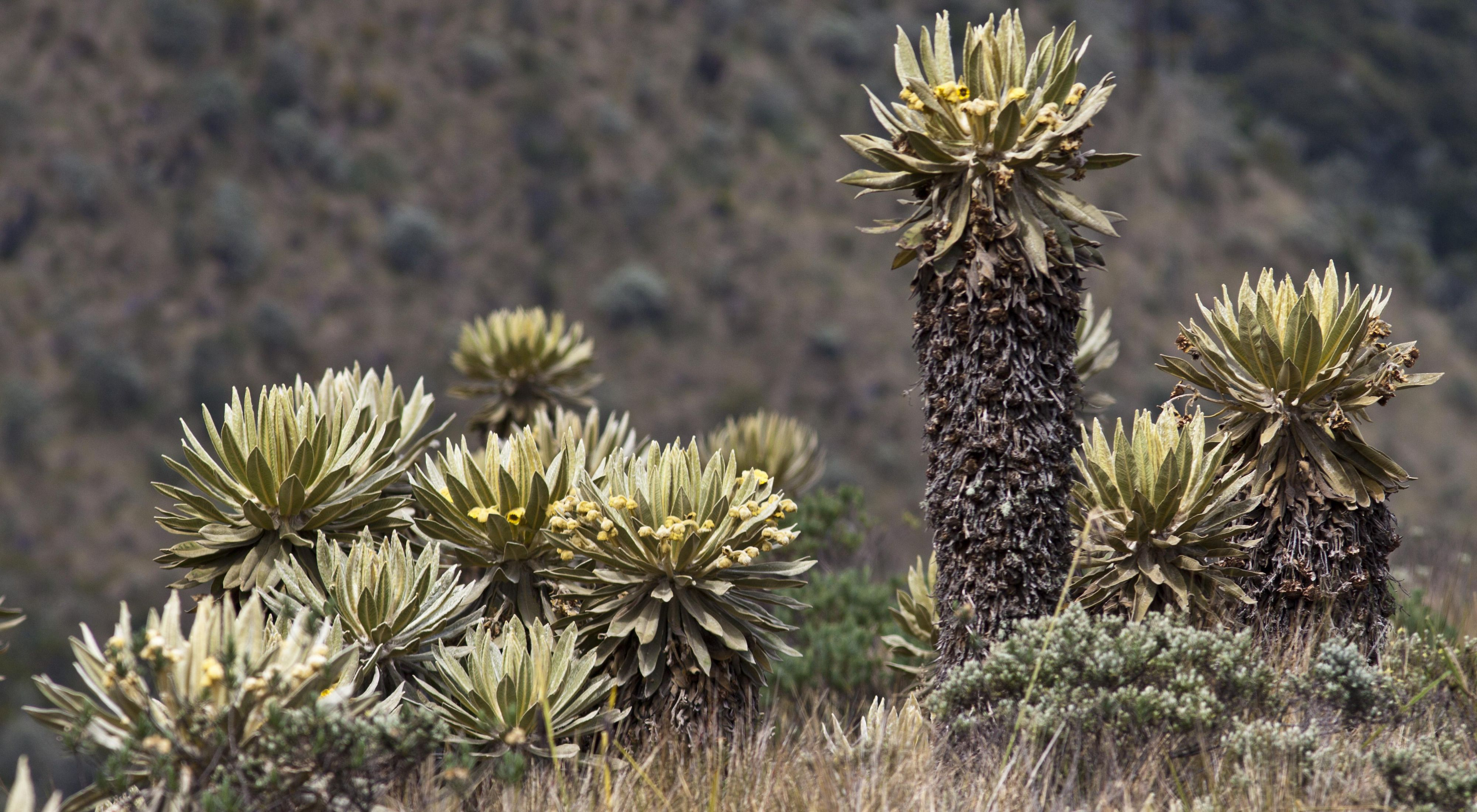 Parque Nacional Chingaza