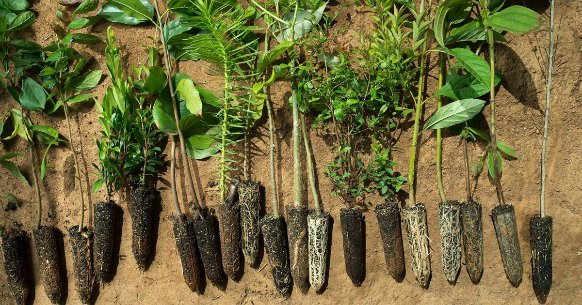 Bosque Atlántico de Brasil.