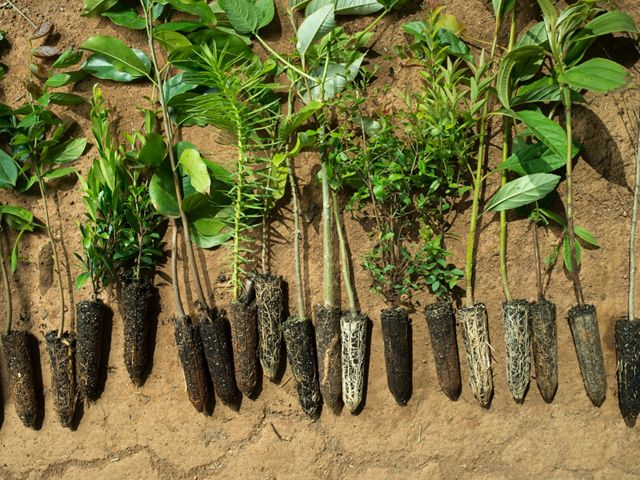 a collection of tree seedlings laid out on the ground