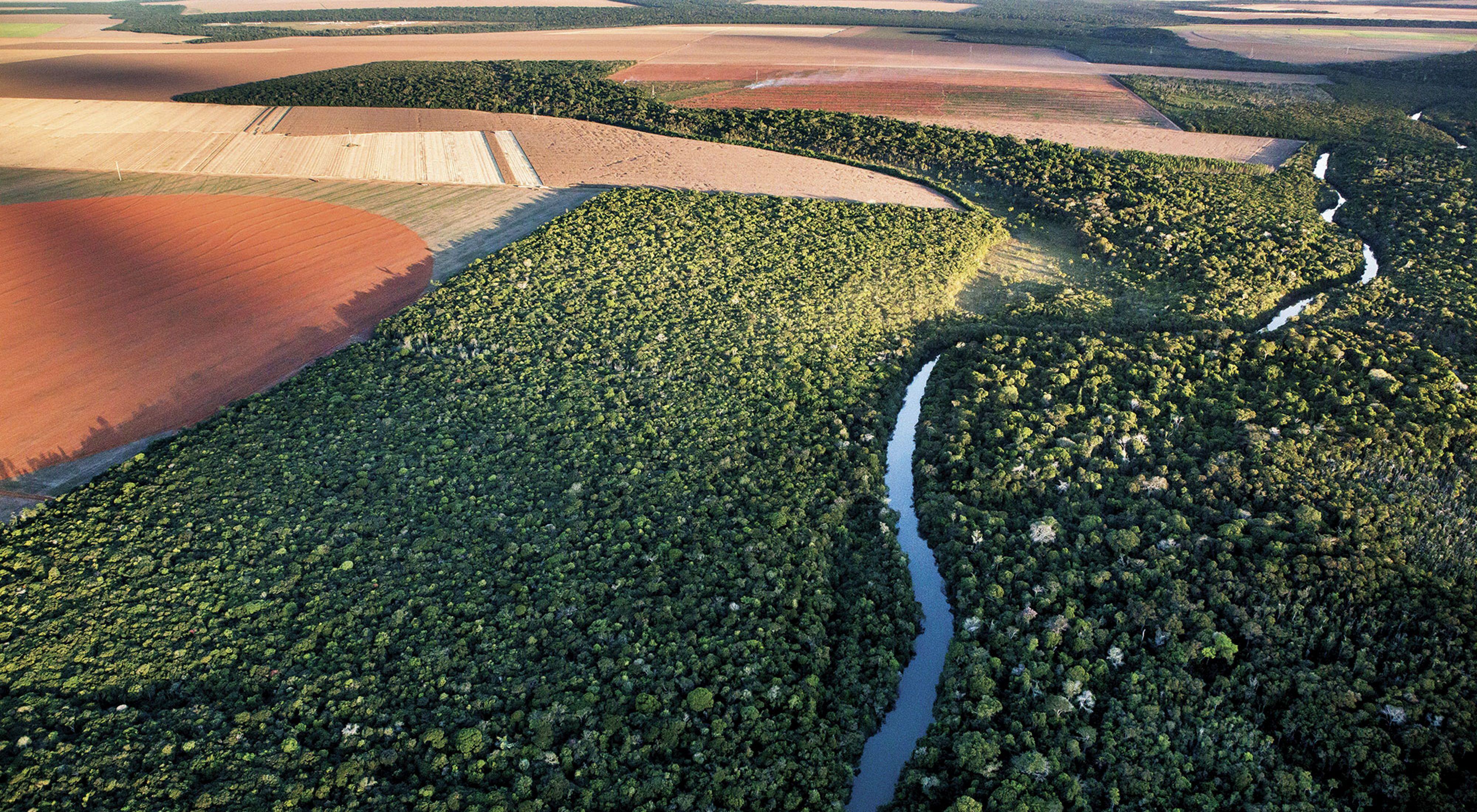Rodeado de campos de soja, el bosque nativo de Mato Grosso sobrevive gracias a herramientas como Agroideal que están ayudando a llevar la producción de alimentos en Brasil