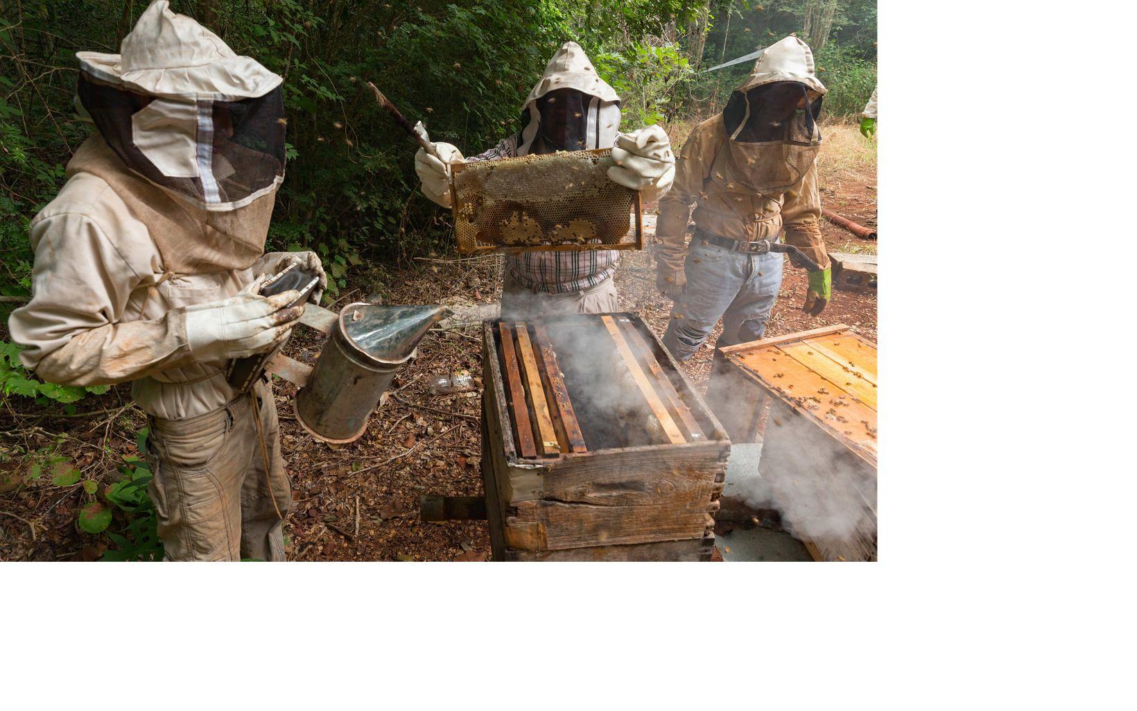 apicultura en el ejido de San Agustín, Yucatán.