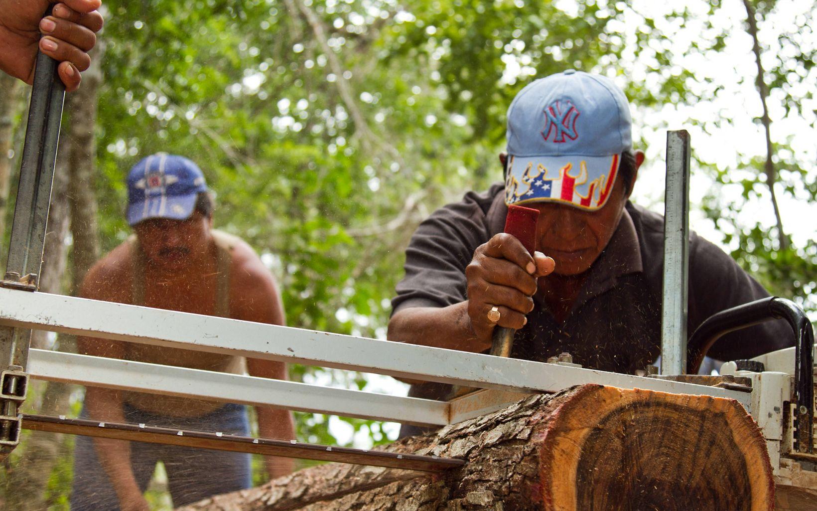 Portátil para cortar tablas de madera de los árboles que cosechan