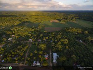 Bosques en restauración