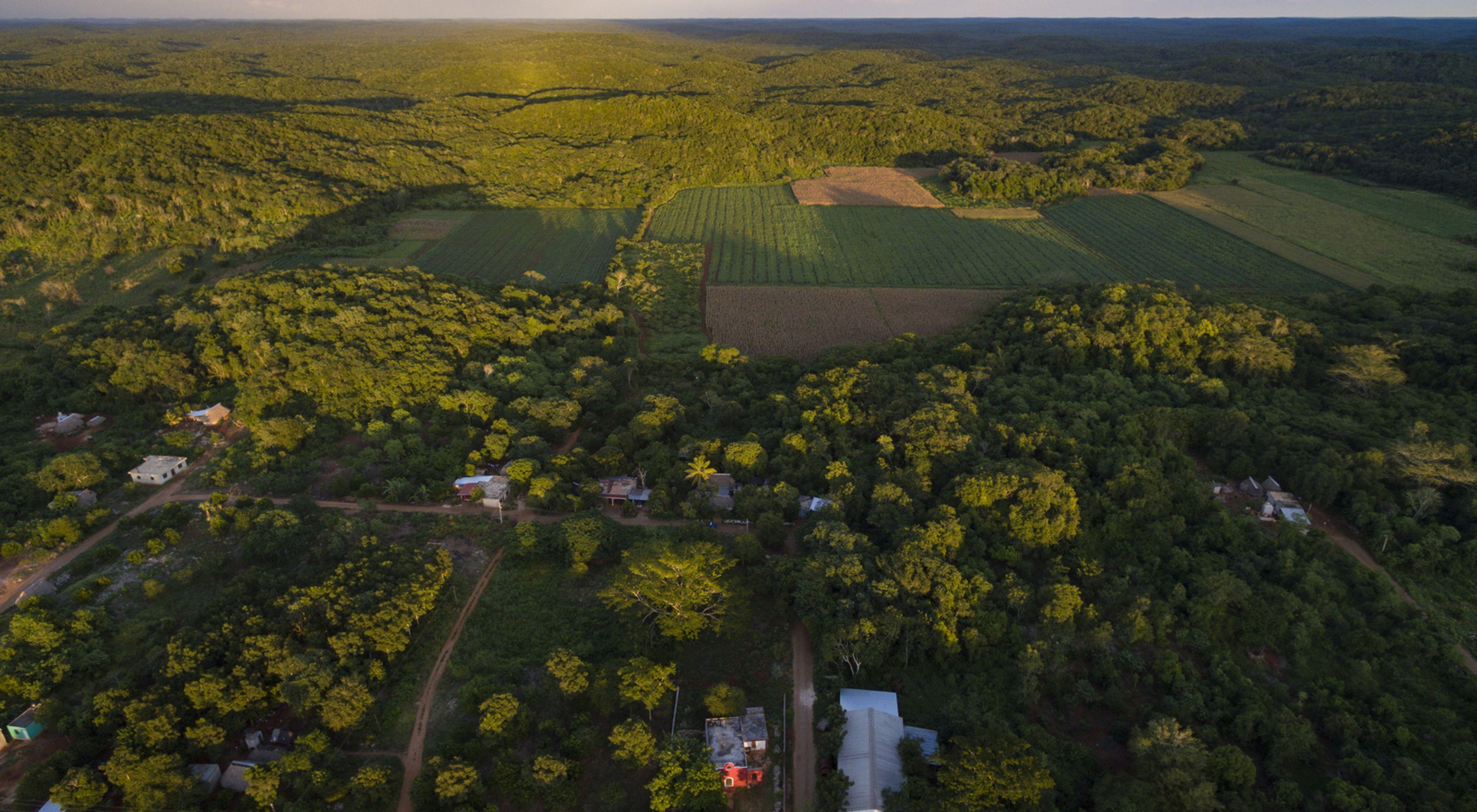 cambio climático, contra la deforestación en méxico