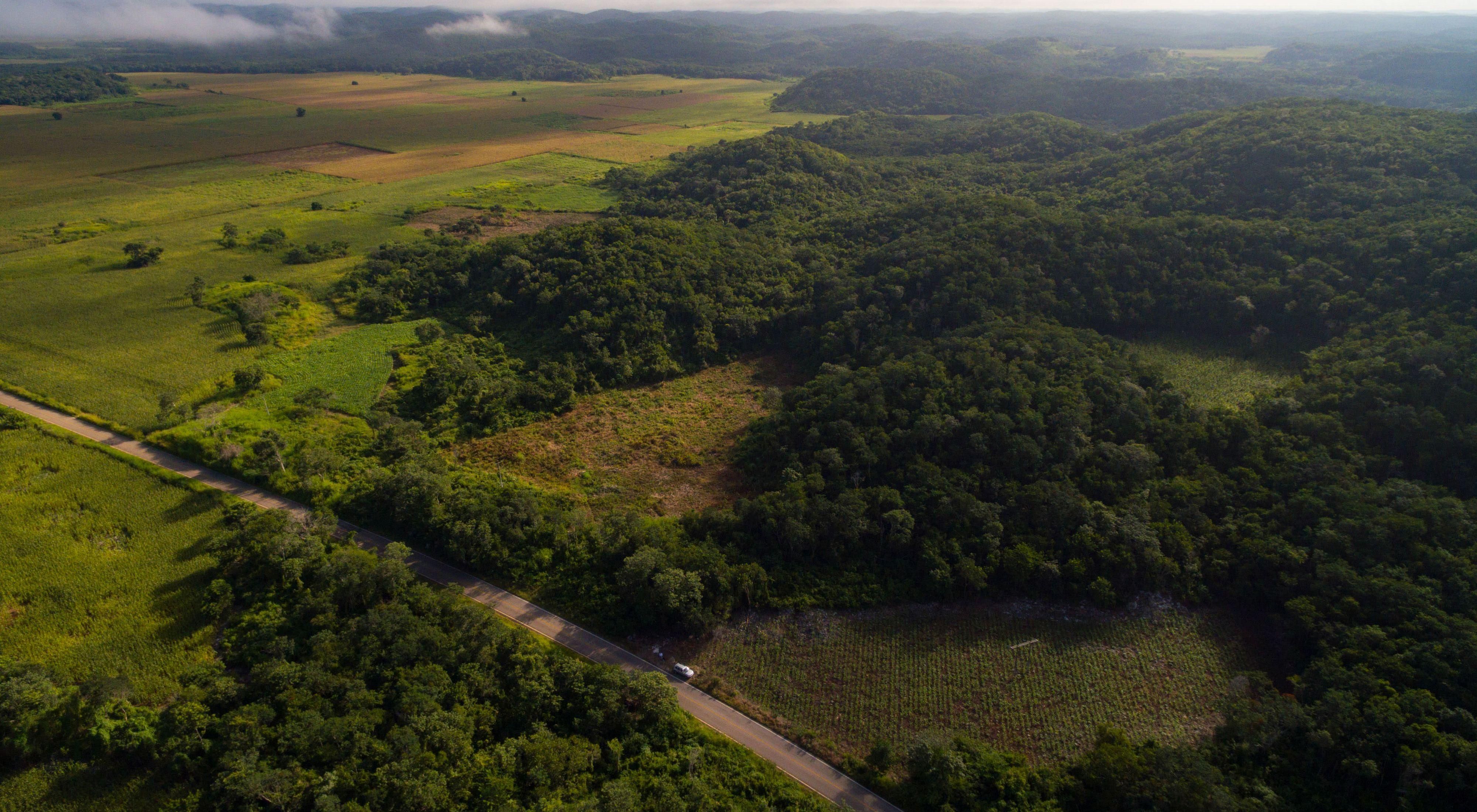 Vista aérea de los campos de maíz cerca de la comunidad menonita de Santa María, Campeche, México.