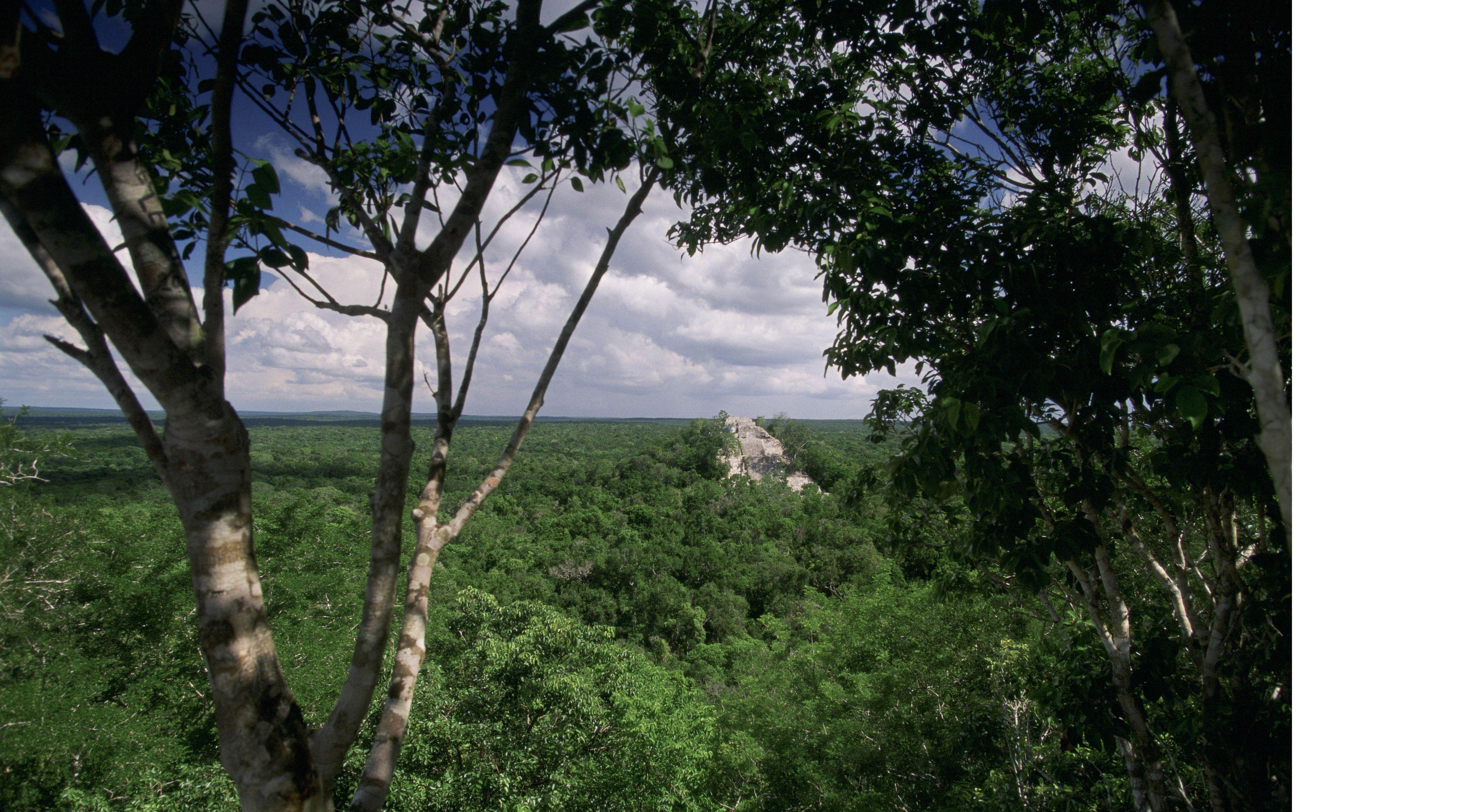 El denso bosque tropical de tierras bajas rodea el antiguo sitio Maya, Calakmul