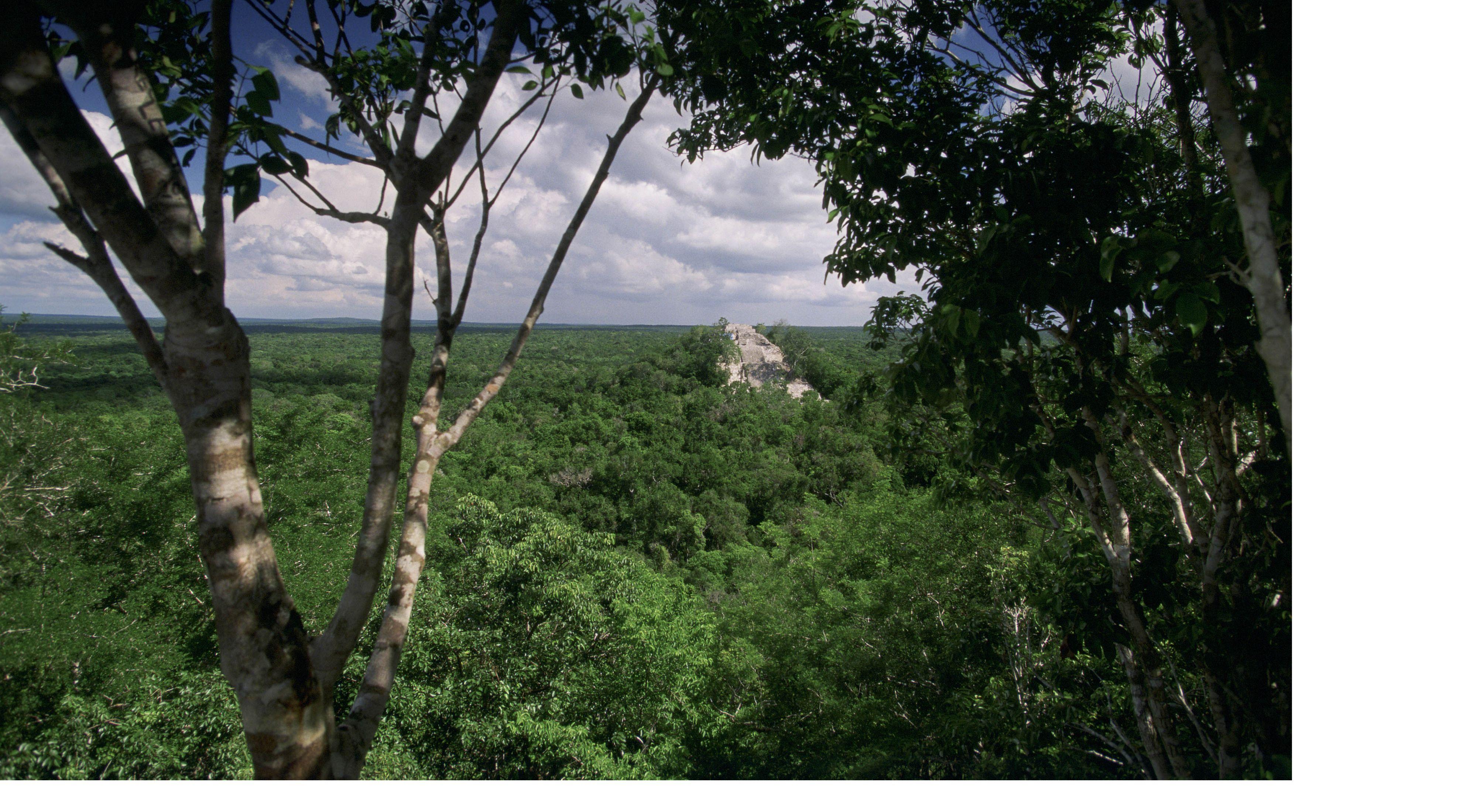 El denso bosque tropical de tierras bajas rodea el antiguo sitio Maya, Calakmul, ubicado en la Reserva de la Biosfera Calakmul (Reserva de la Biosfera Calakmul).