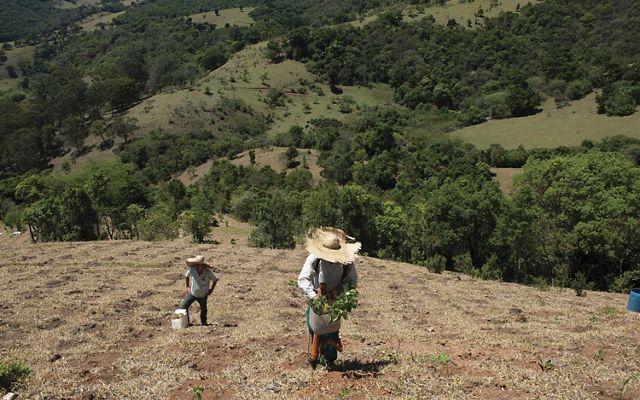 Vinicius Uchoa está ayudando a los esfuerzos de reforestación en la Sierra de Mantiqueira