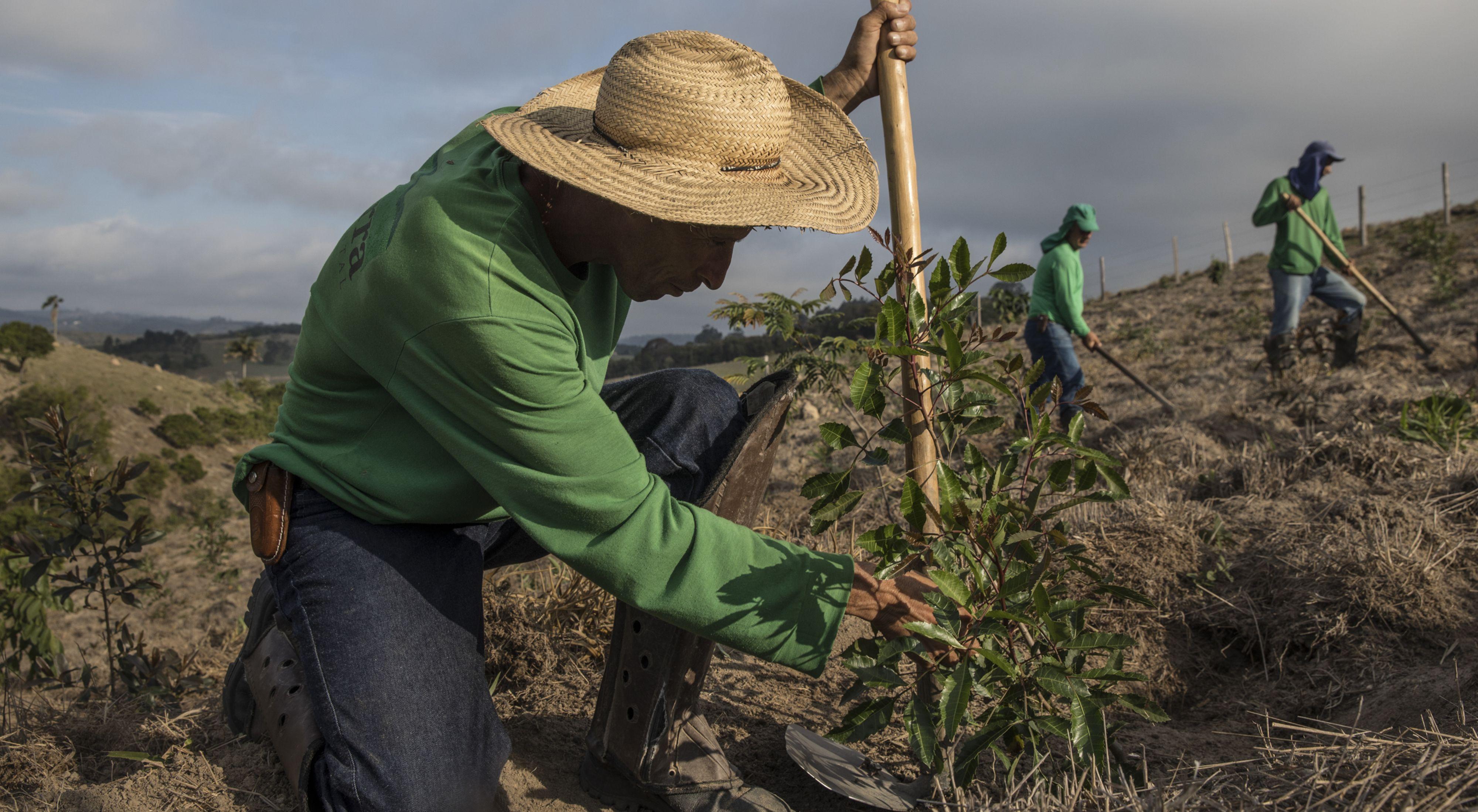 A man plants a tree seedling in the Mantiqueira region in Brazil
