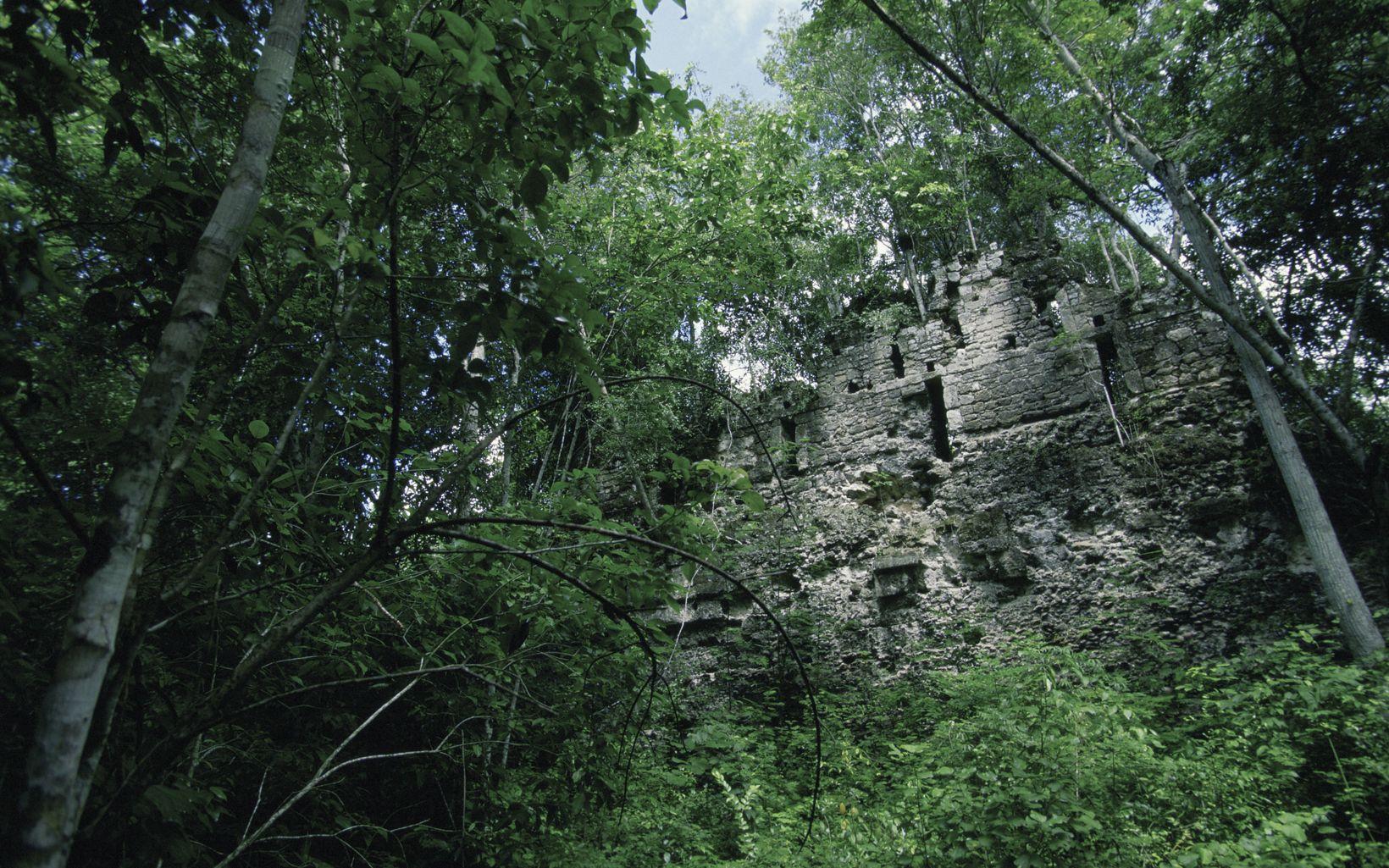Ruinas de un templo maya, Pared de los Reyes, rodeadas de un denso bosque tropical de tierras bajas en la Reserva de la Biosfera de Calakmul, México.