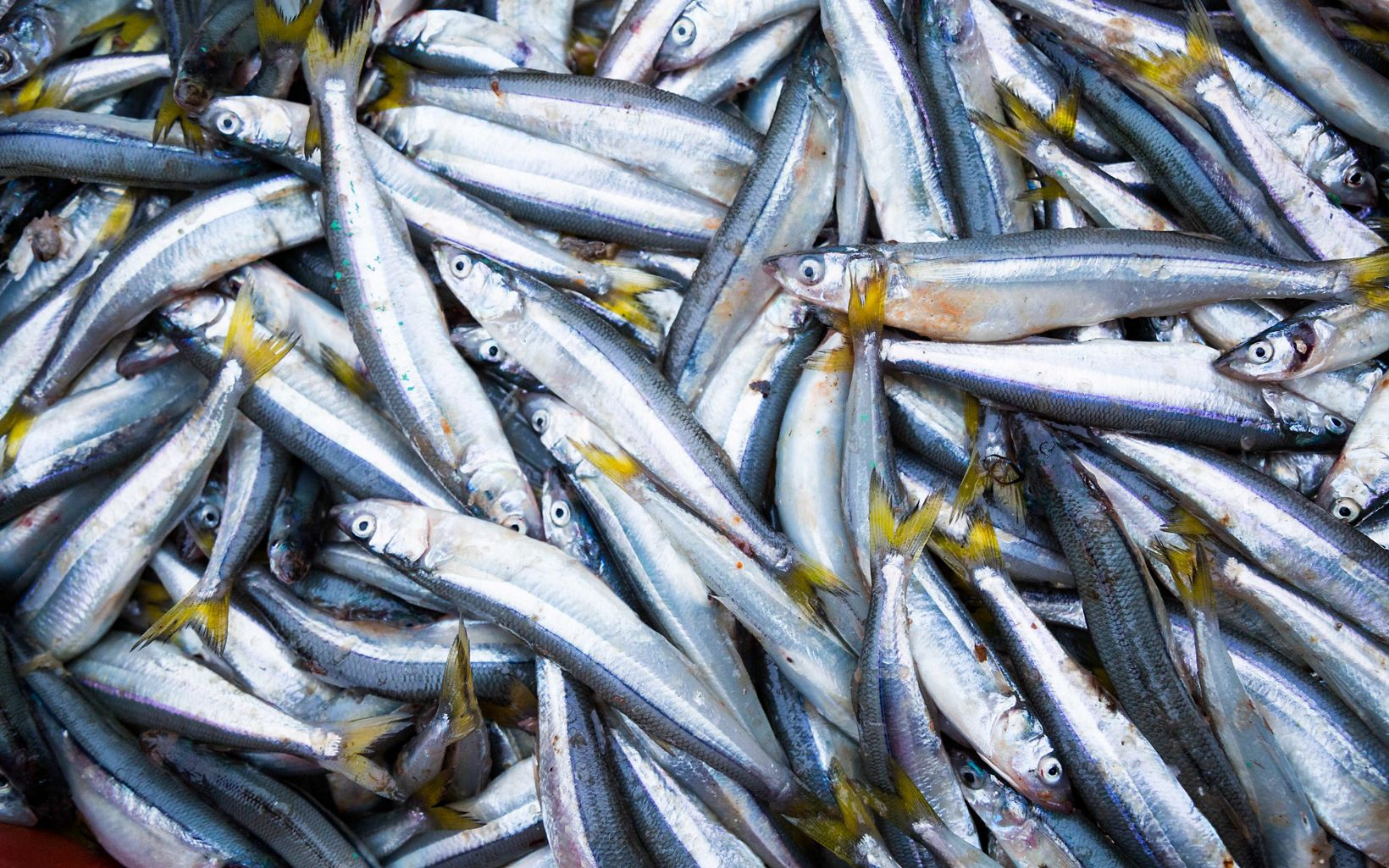 Pesca sostenible en las costas de Perú