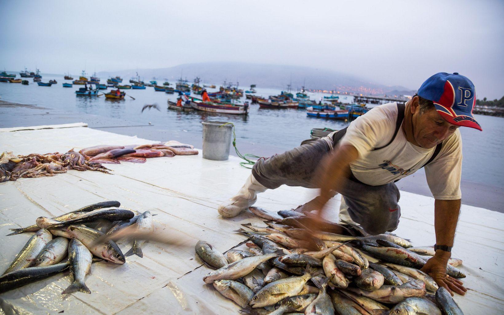 Pesca de anchovetas
