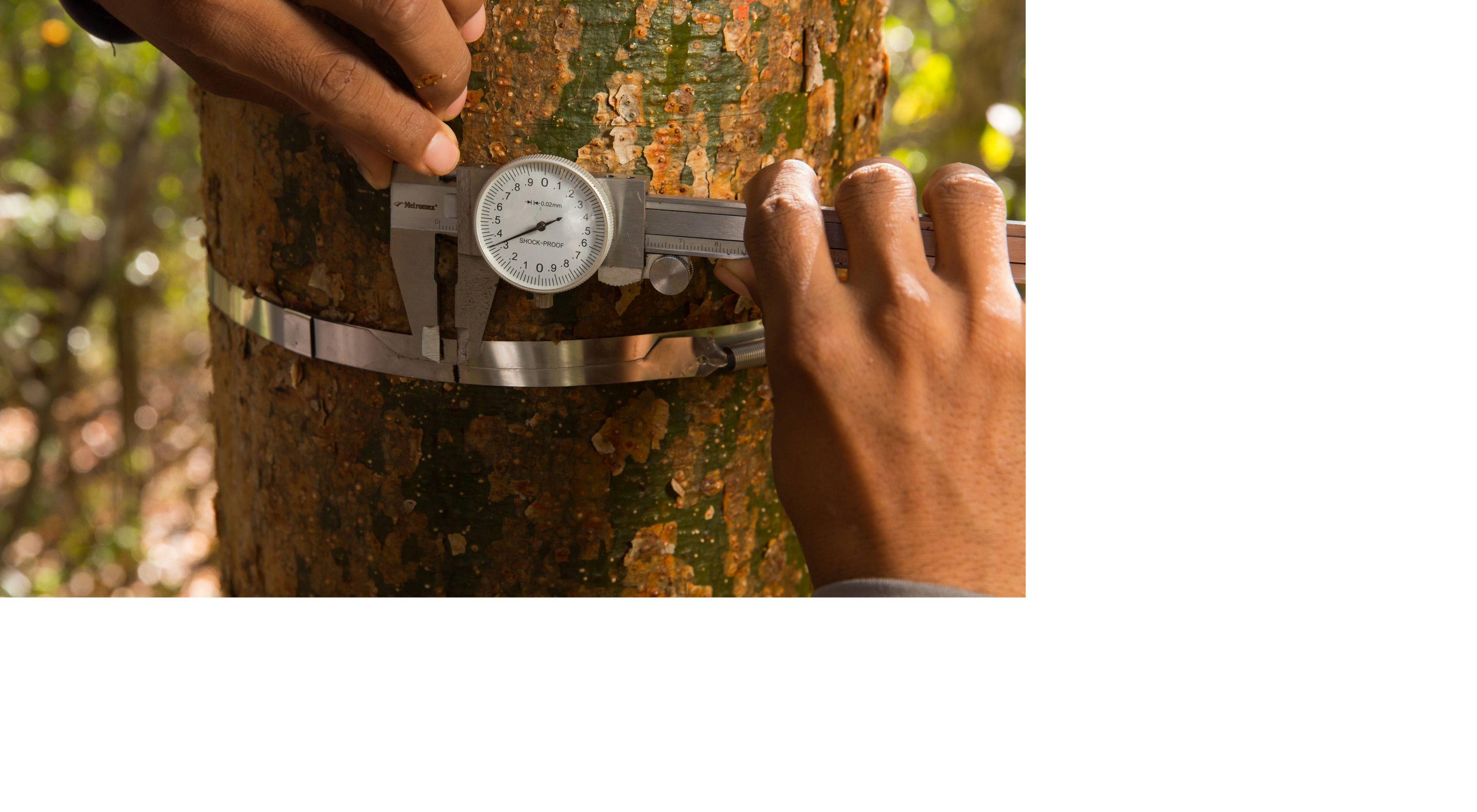 un hombre trabaja en la Selva Maya