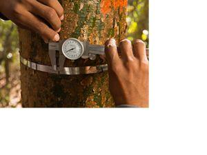 Trabajo en la Selva Maya con Forestación