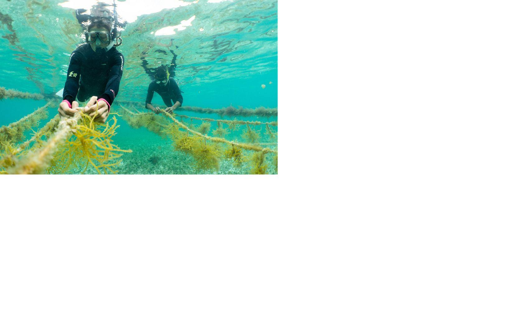 Restauración de oceanos en Belice