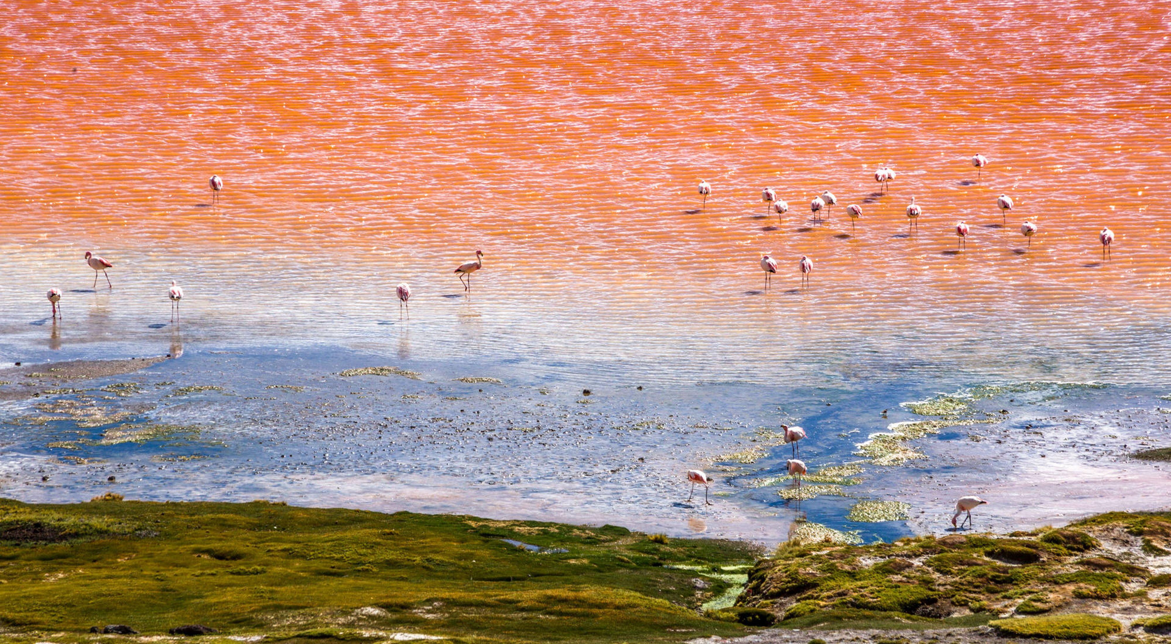 Fotografía tomada en la laguna Colorada en el altiplano boliviano. 01/2019
