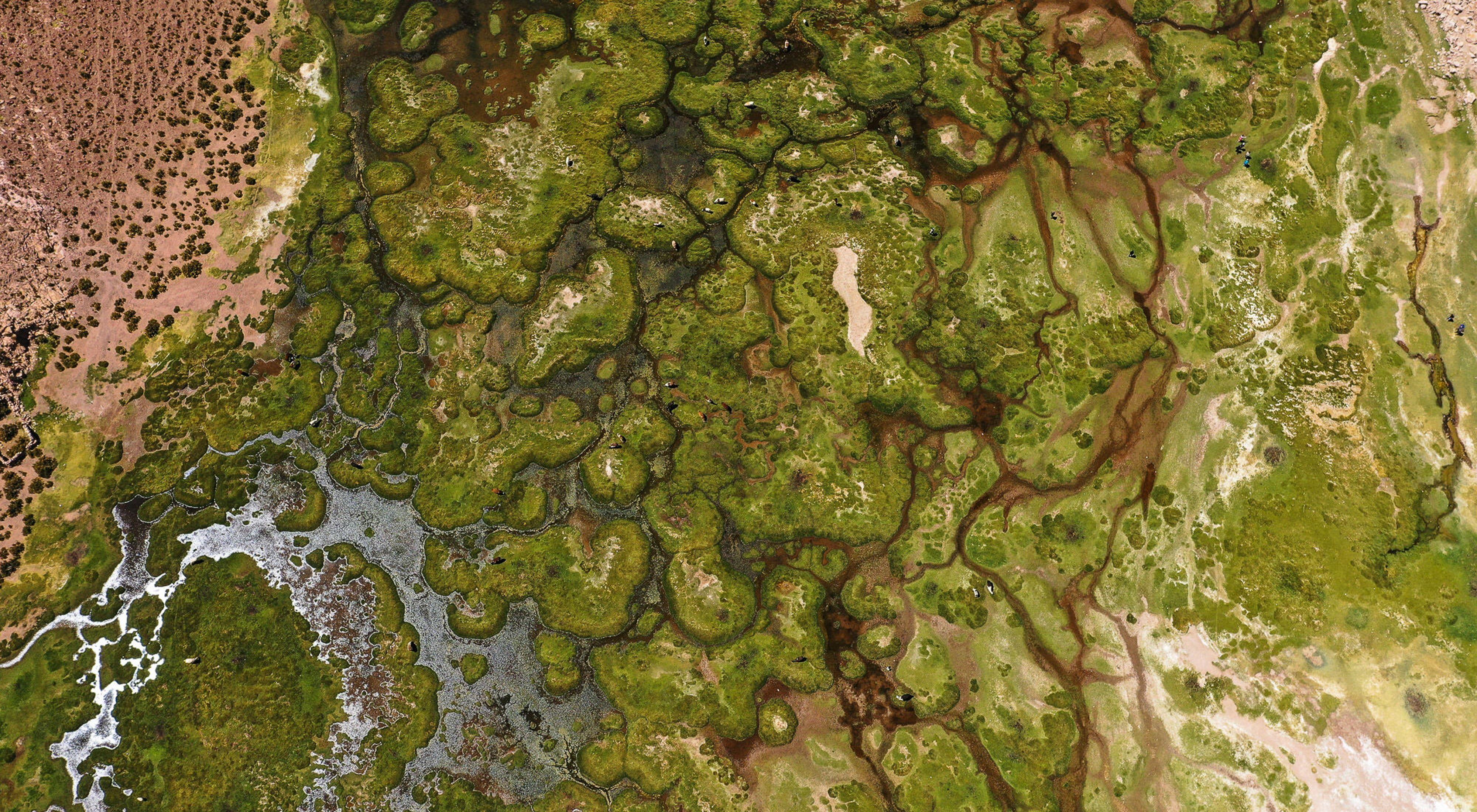 Los páramos que se forman entre la cordillera volcánica de Bolivia alberga una cantidad impresionante de vida entre el lugar más árido del planeta. Enrique Baldivieso, Potosi, Bolivia.