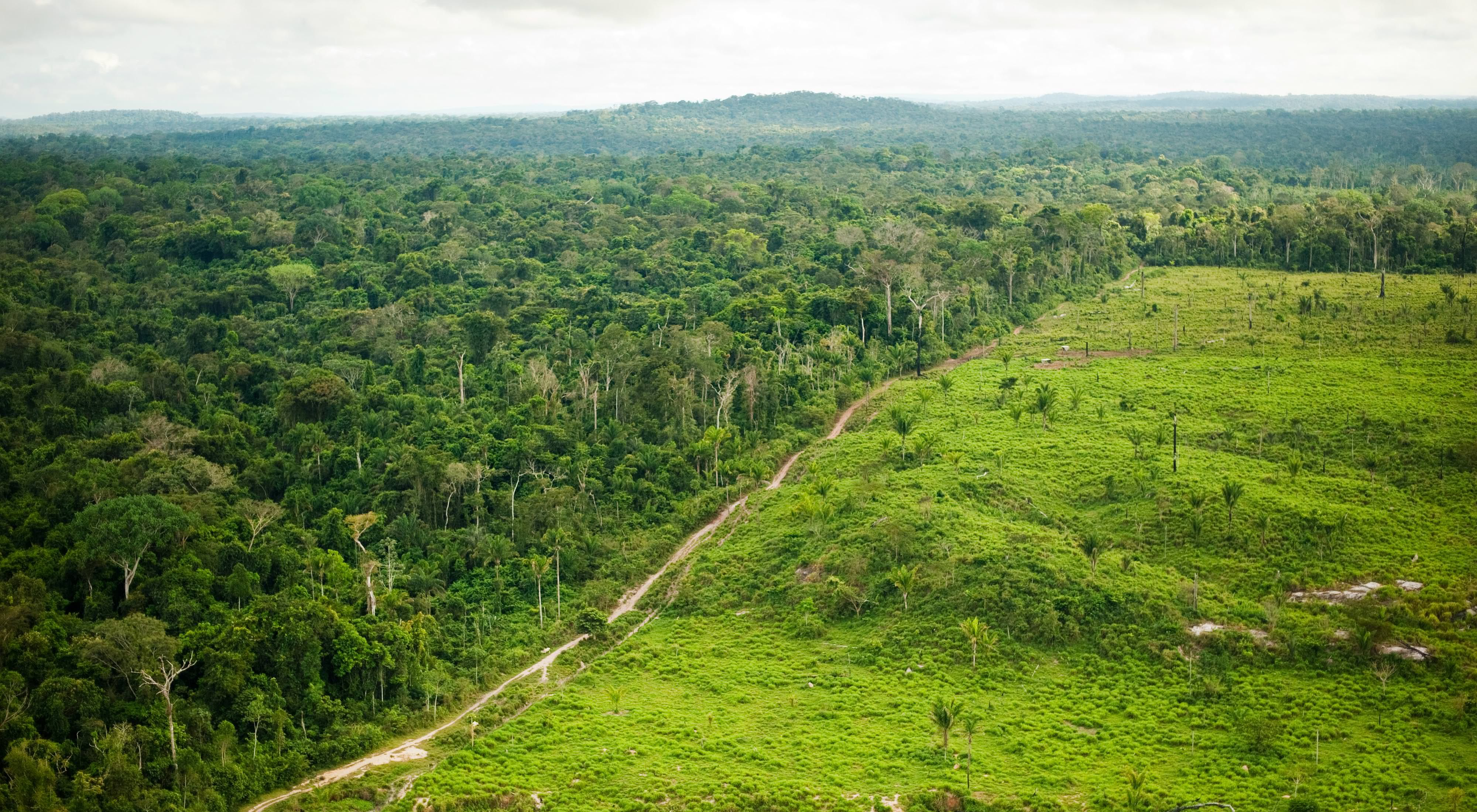 aerial of the amazon rainforest with large clearing from logging and burning