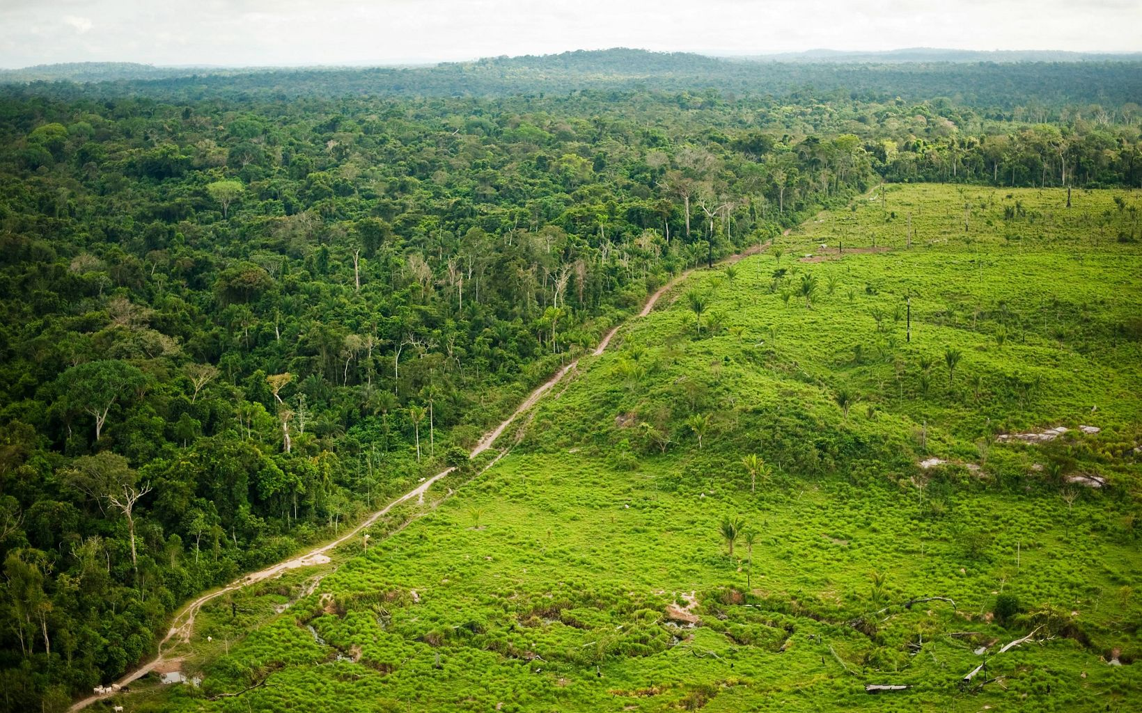 Vista aérea que muestra la deforestación de la ganadería