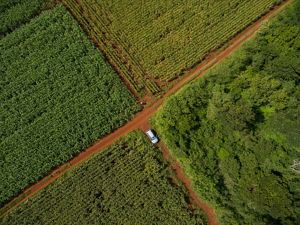 Aerial view of corn fields along the edge of the forest in the ejido of San Agustin, Yucatan, Mexico. The Nature Conservancy works with landowners, communities, and governments in Mexico to promote low-carbon rural development through the design and implementation of improved policy and practice in agriculture, ranching, and forestry. The Conservancy is leading the initiative, Mexico REDD+ Program in conjunction with the Rainforest Alliance, the Woods Hole Research Center, and Espacios Naturales y Desarrollo Sustentable.