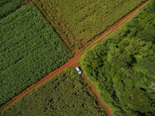 Aerial view of dirt-road intersection in cornfields