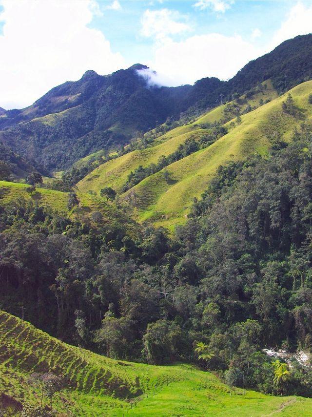 Bosque Alto Andino en el departamento de Caldas