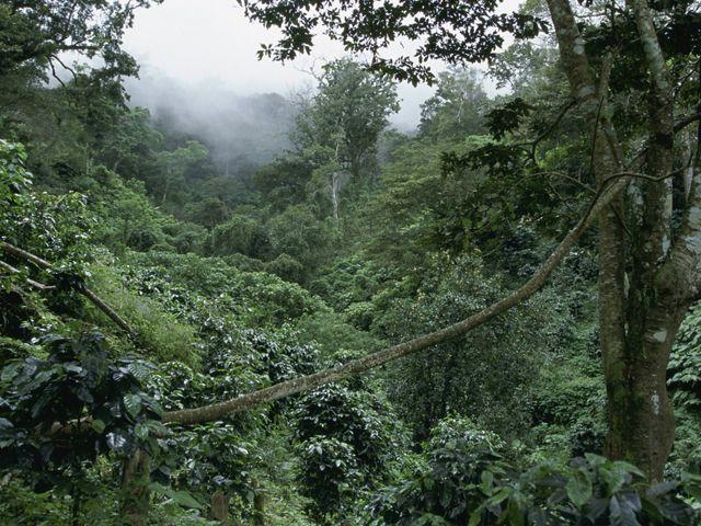Cuenca de la Sierra Madre y Reserva de la Biosfera La Sepultura near Tres Picos y Pijijiapan, Chiapas, Mexico