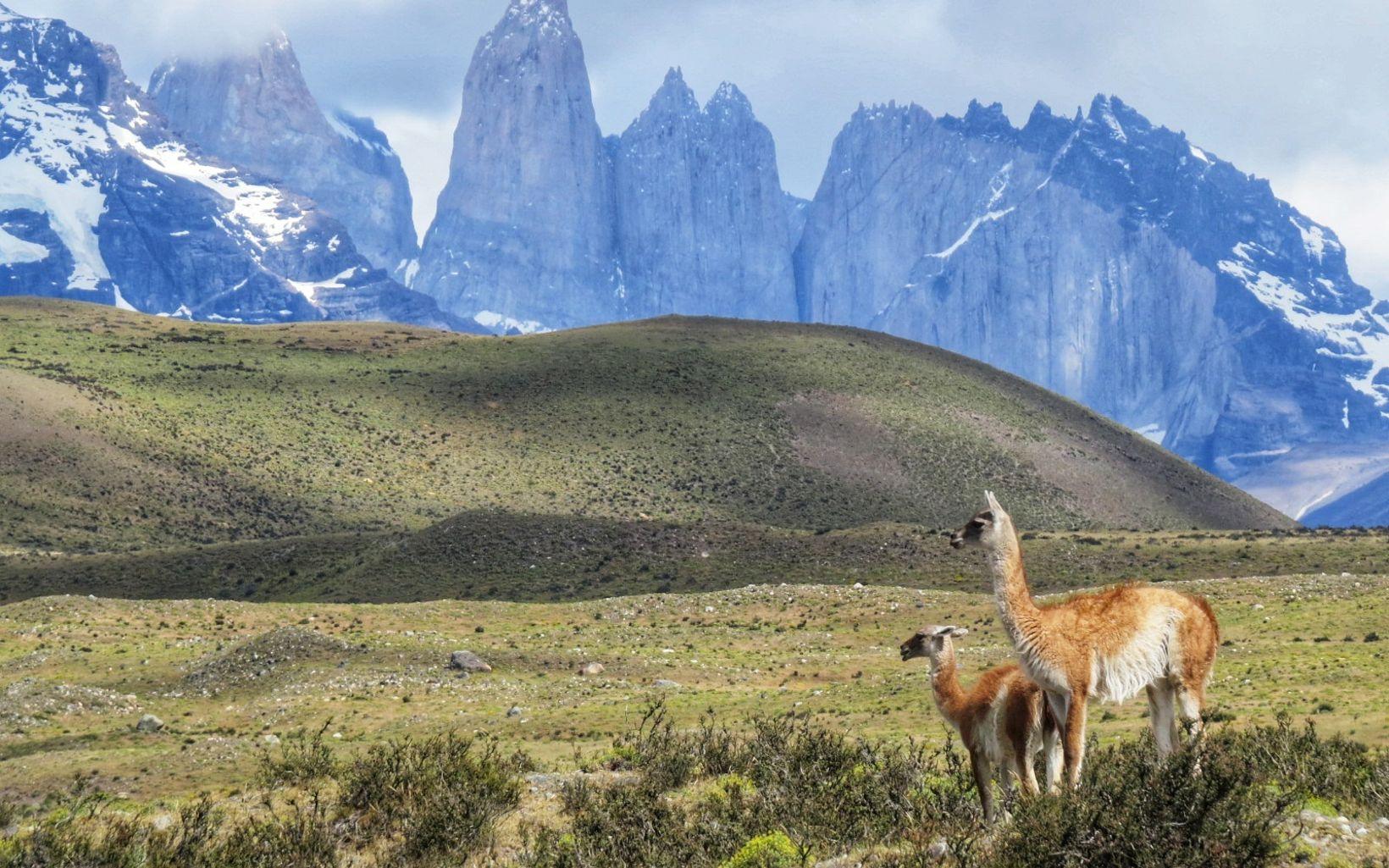 Chile es un país con características geográficas que lo dotan de una rica biodiversidad