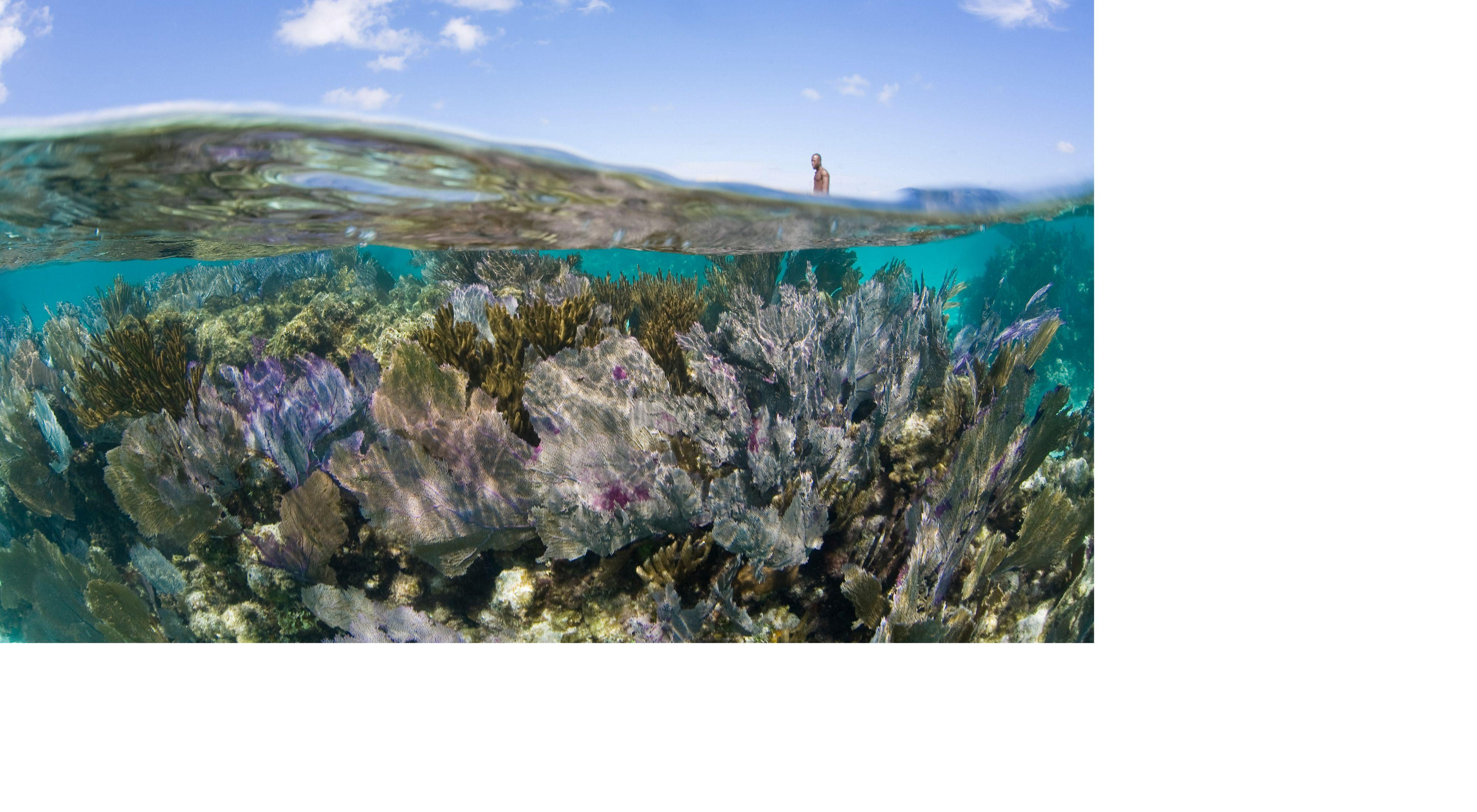 Corales en Belice
