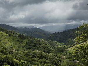 seguridad hídrica y los bosques