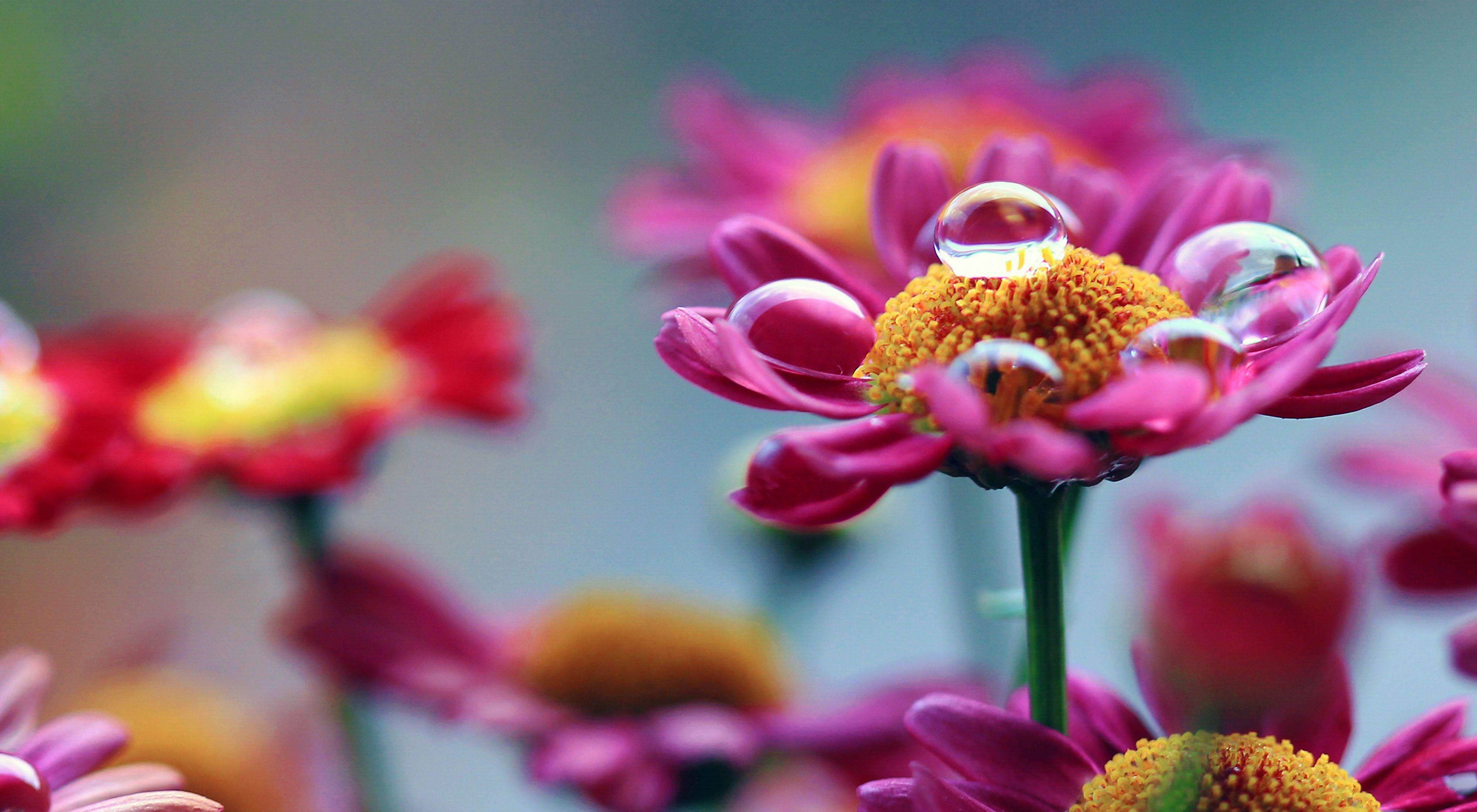 Water droplet on flowers
