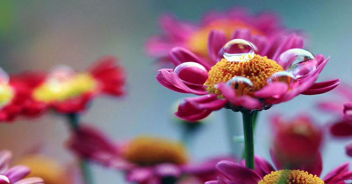 Droplet on a flower