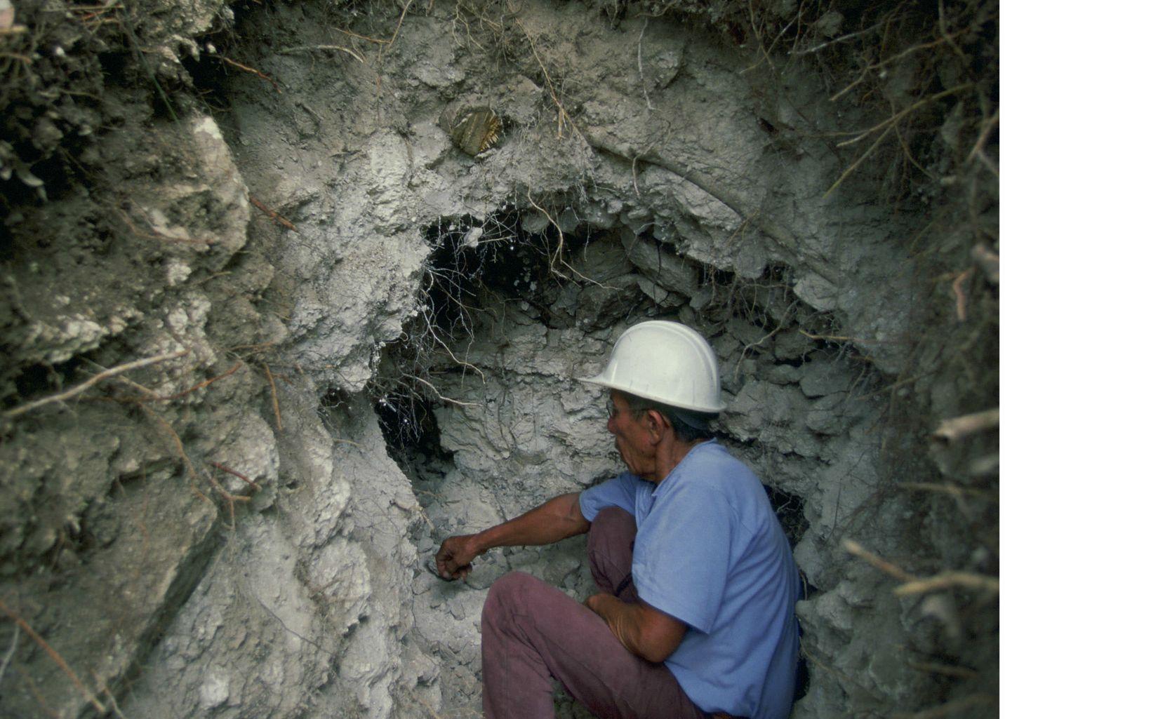 guardián de los bosques Mayas