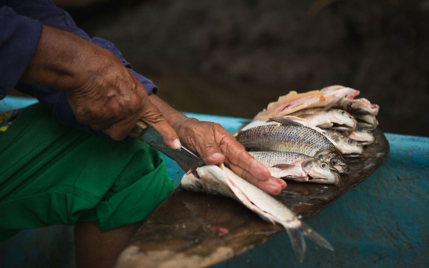 Un pescador prepara pescado fresco en Bocas de Barbacoas, la desembocadura de la cuenca del río Magdalena en Antioquia, Colombia.