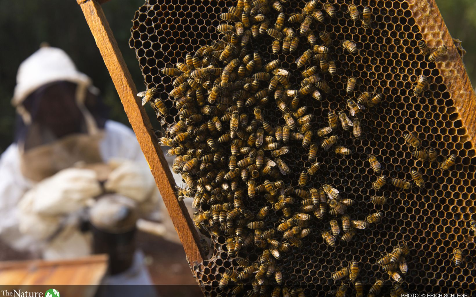 Colmenas de miel en San Agustín, México
