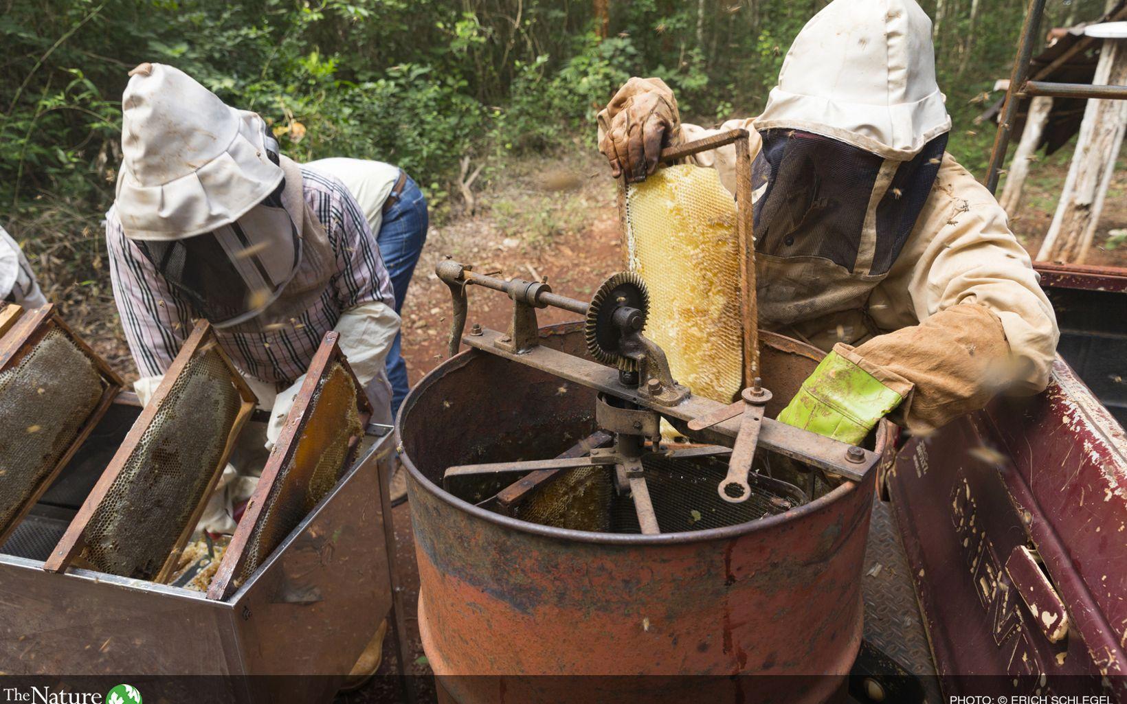 Producción de miel en San Agustín, México