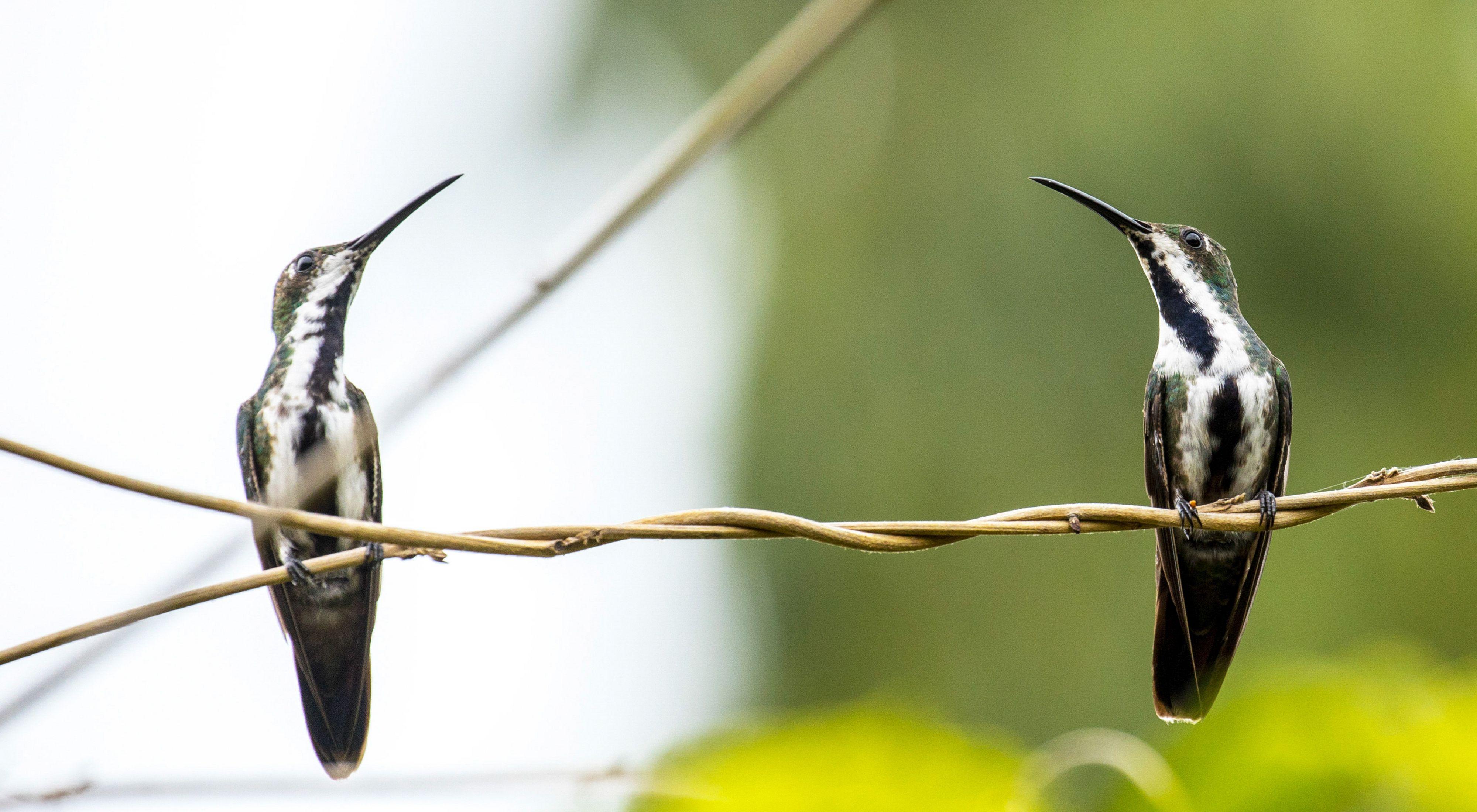 Toma de dos colibría