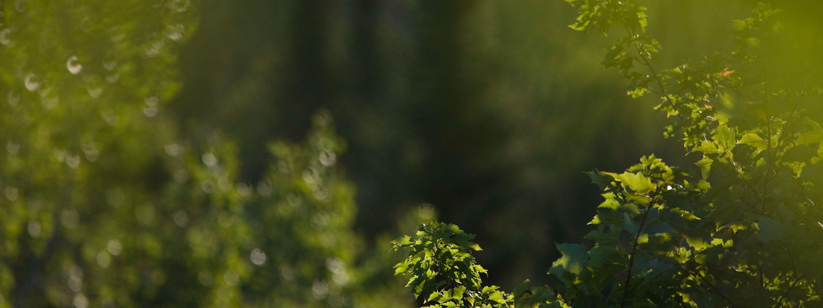 Closeup of birch bark on a tree trunk.