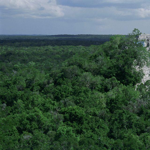 El denso bosque tropical de tierras bajas rodea el antiguo sitio Maya, Calakmul, ubicado en la Reserva de la Biosfera Calakmul (Reserva de la Biosfera Calakmul)