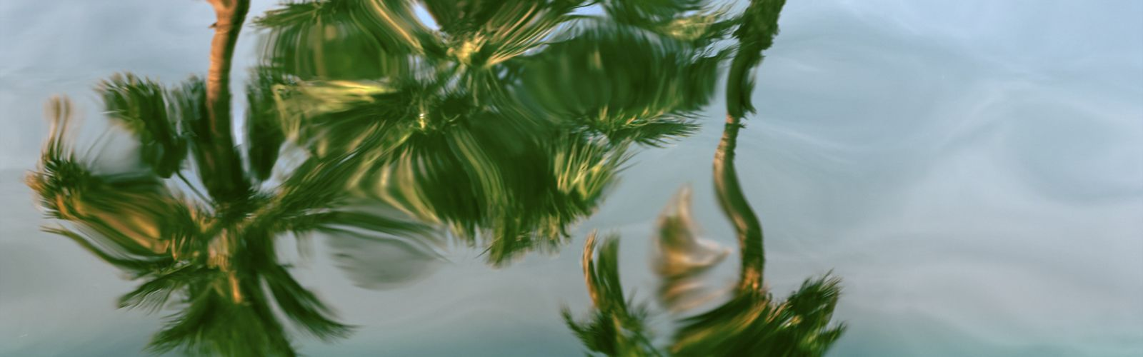I took this picture white palm trees in Palm Springs in this spring.