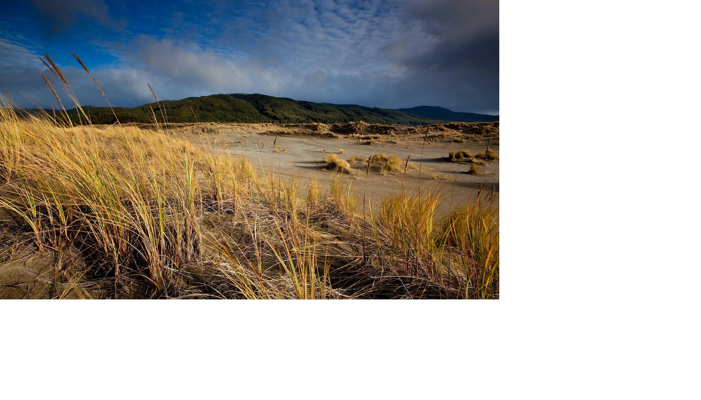 Vista de la Reserva de Valdivia