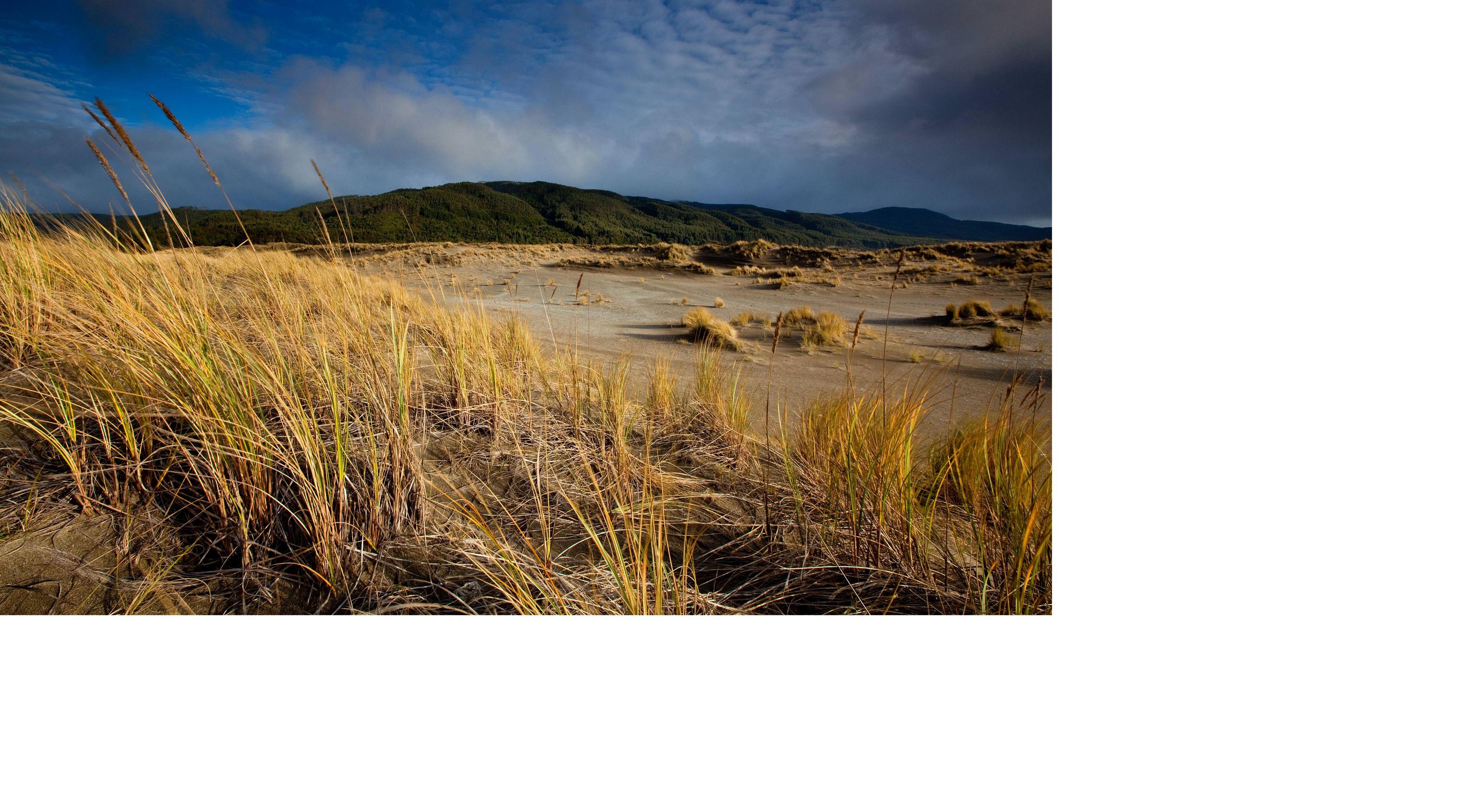 Reserva Costera Valdivia, Chile.