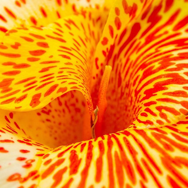 A macro shot of a yellow orchid flower with red spots.