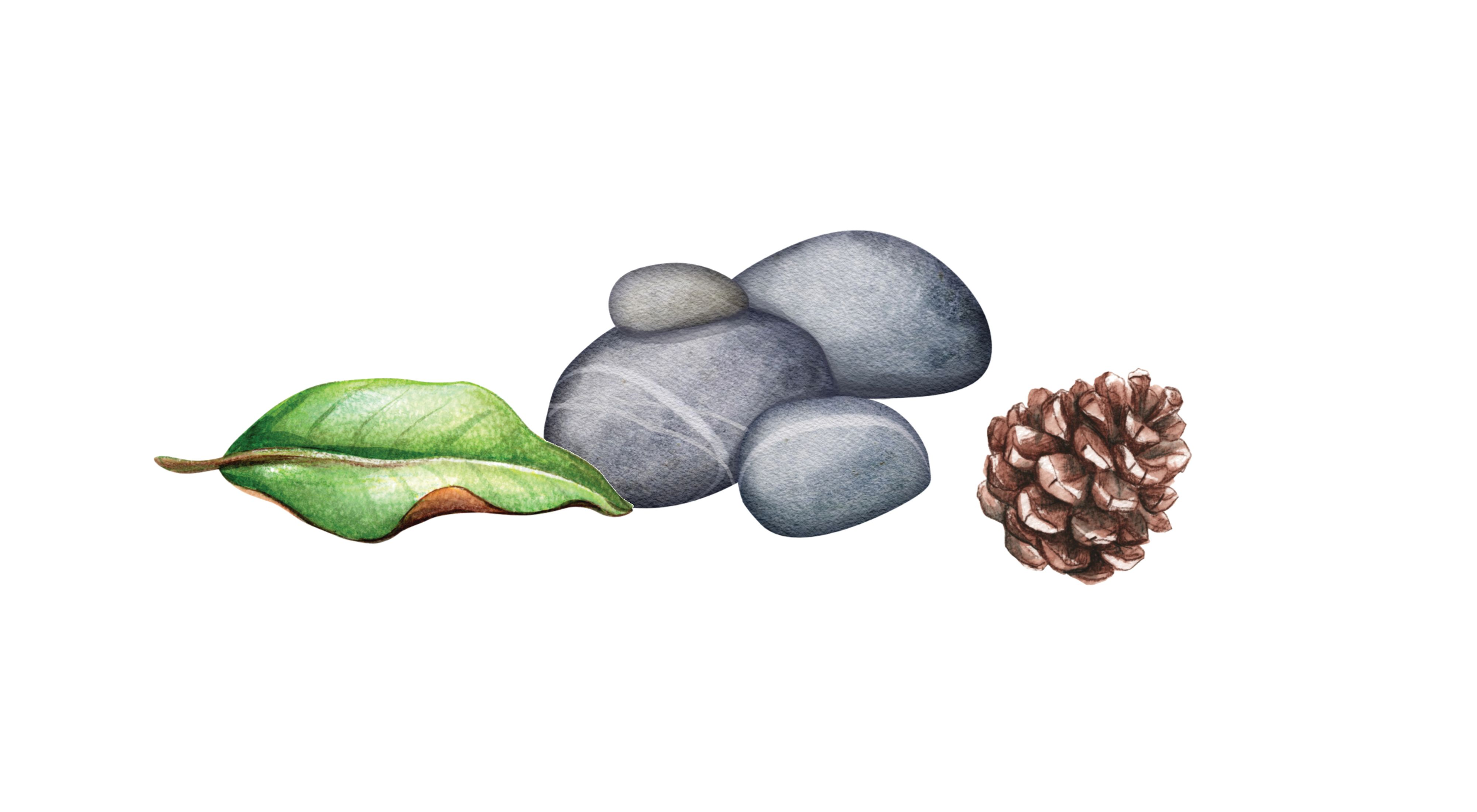 Watercolor illustration of a leaf, stones and a pinecone
