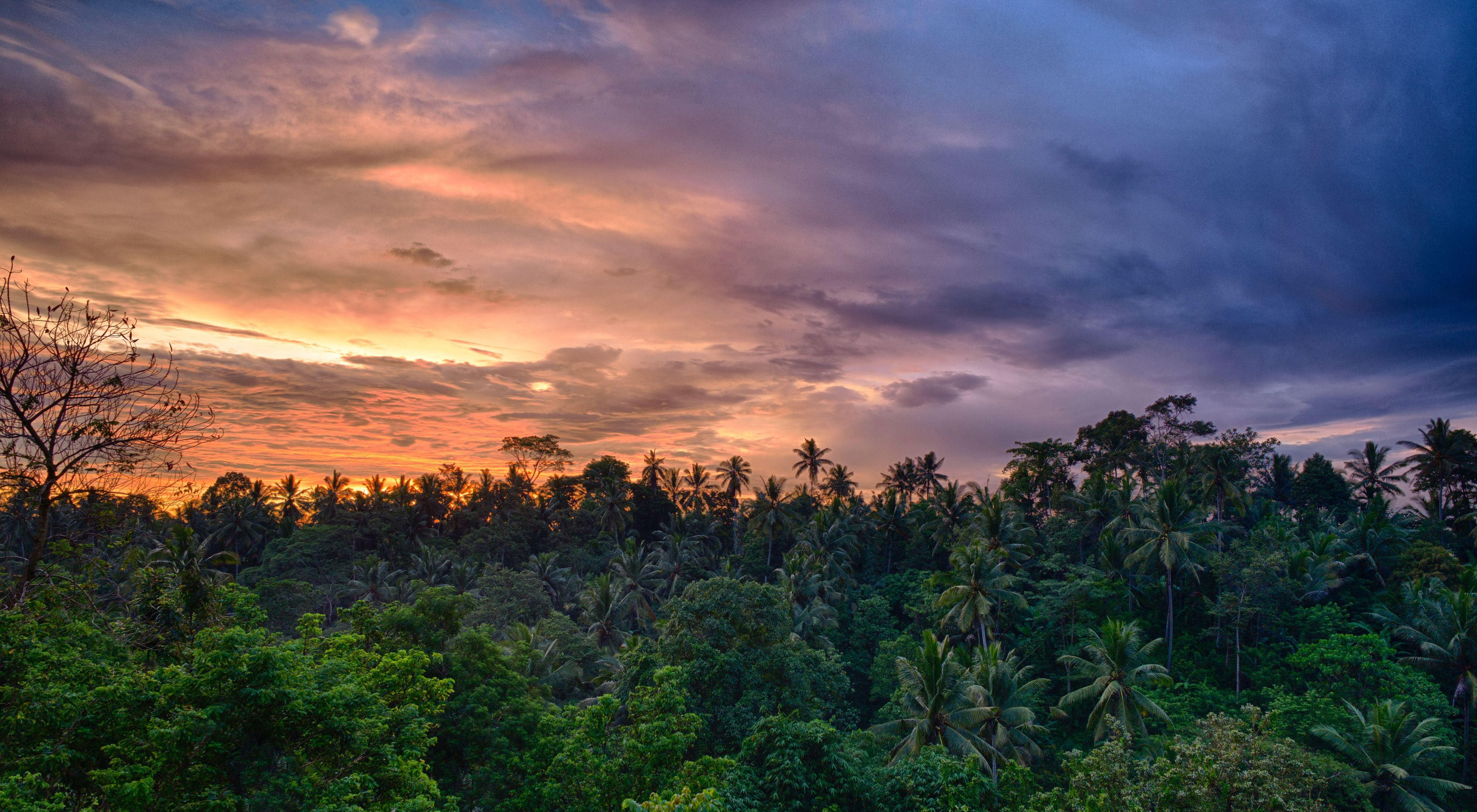 The sun sets over a tropical forest near Bali, Indonesia.
