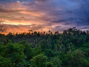 a colorful sunset over a lush tropical forest