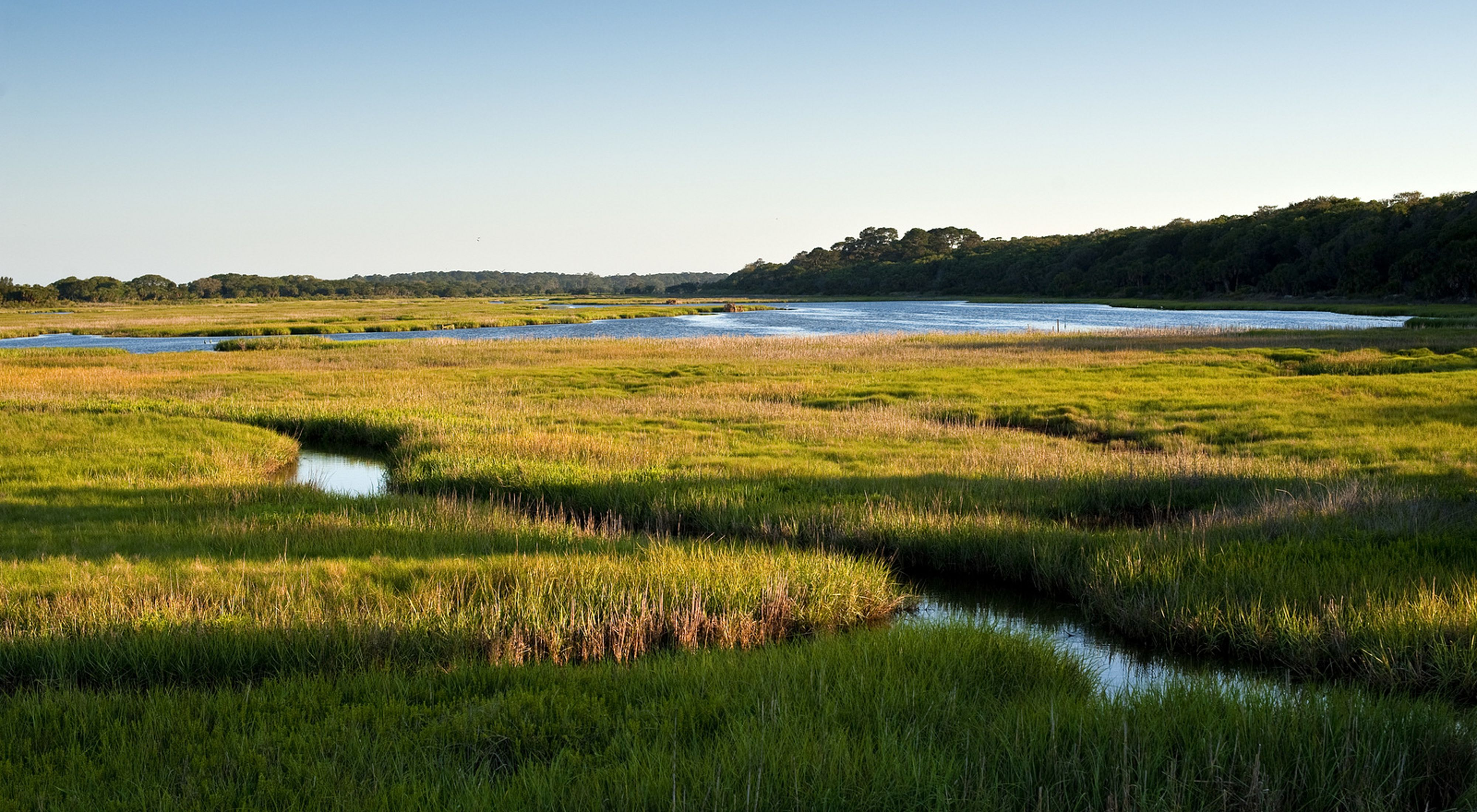 A marshland teeming with green grasses stretches into the distance on Little St. Simons Island.