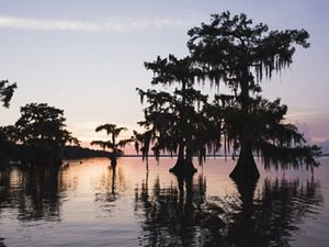 Lake Fausse Pointe, Louisiana